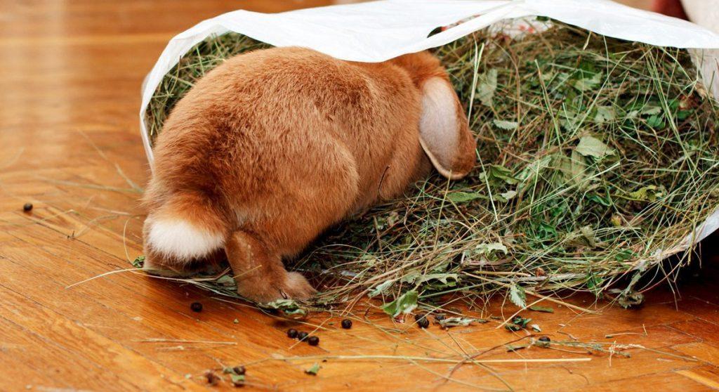 кролик копается в сене