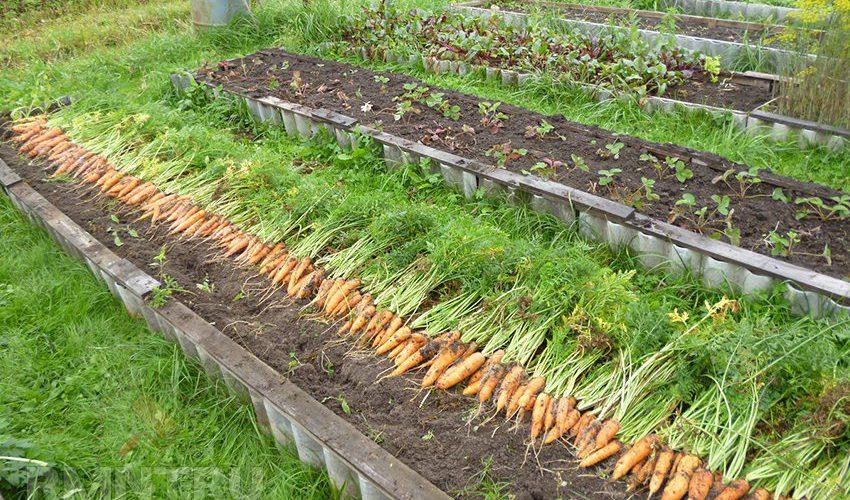 Секрет богатого урожая: выбираем удобрение
