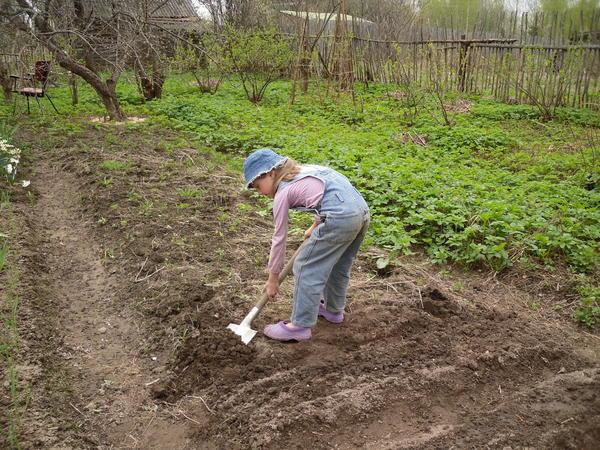 На новом огороде старые методы стали давать сбои